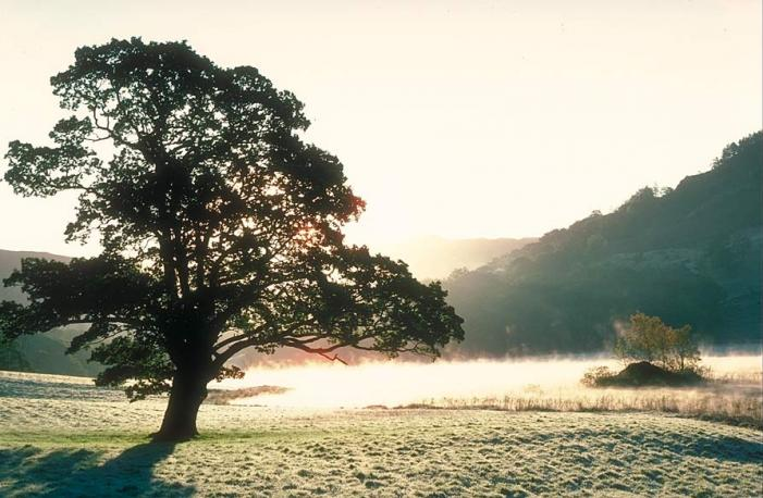 Rydal Frost